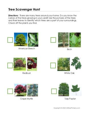 Georgia Tree Scavenger Hunt.pdf