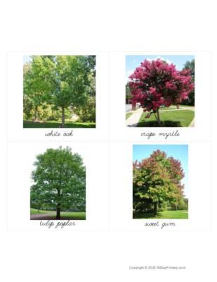 Georgia Trees Classified Cards.pdf