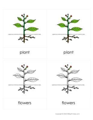 Parts of a Plant 3pt cards.pdf