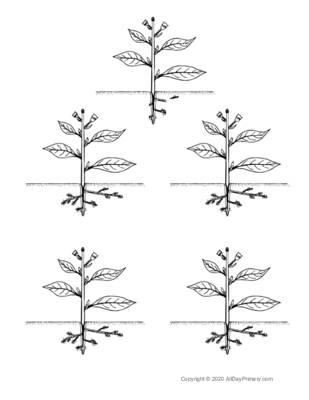 Parts of a Plant Coloring Sheet.pdf