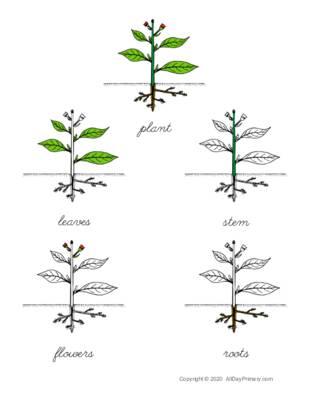 Parts of a Plant Control Chart.pdf