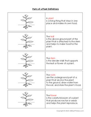 Parts of a Plant Definitions.pdf