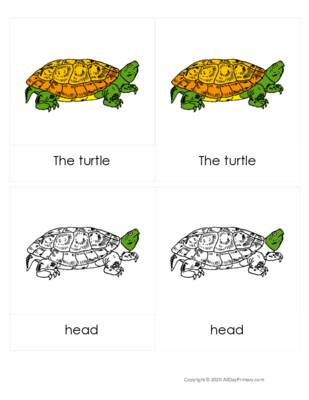 Parts of a Turtle 3 part cards.pdf
