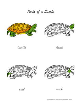 Parts of a Turtle Control Chart.pdf