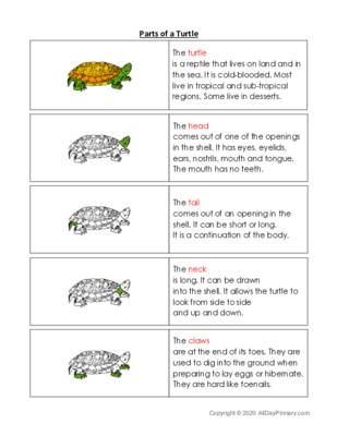 Parts of a Turtle.pdf