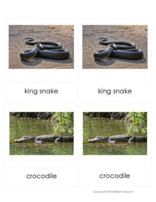 Reptiles 3 part Cards.pdf