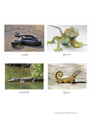 Reptiles From Around the World.pdf
