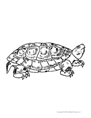 Single Turtle Coloring Page.pdf