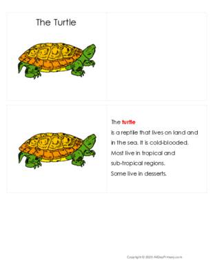 The Turtle Definition Booklet.pdf