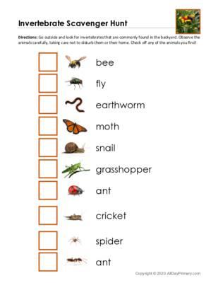 Invertebrate Scavenger Hunt.pdf