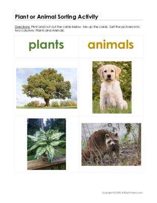 Plant or Animal Sorting Activity.pdf