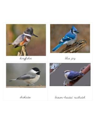 georgia birds.pdf