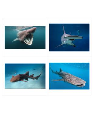 Shark Classified Cards.pdf